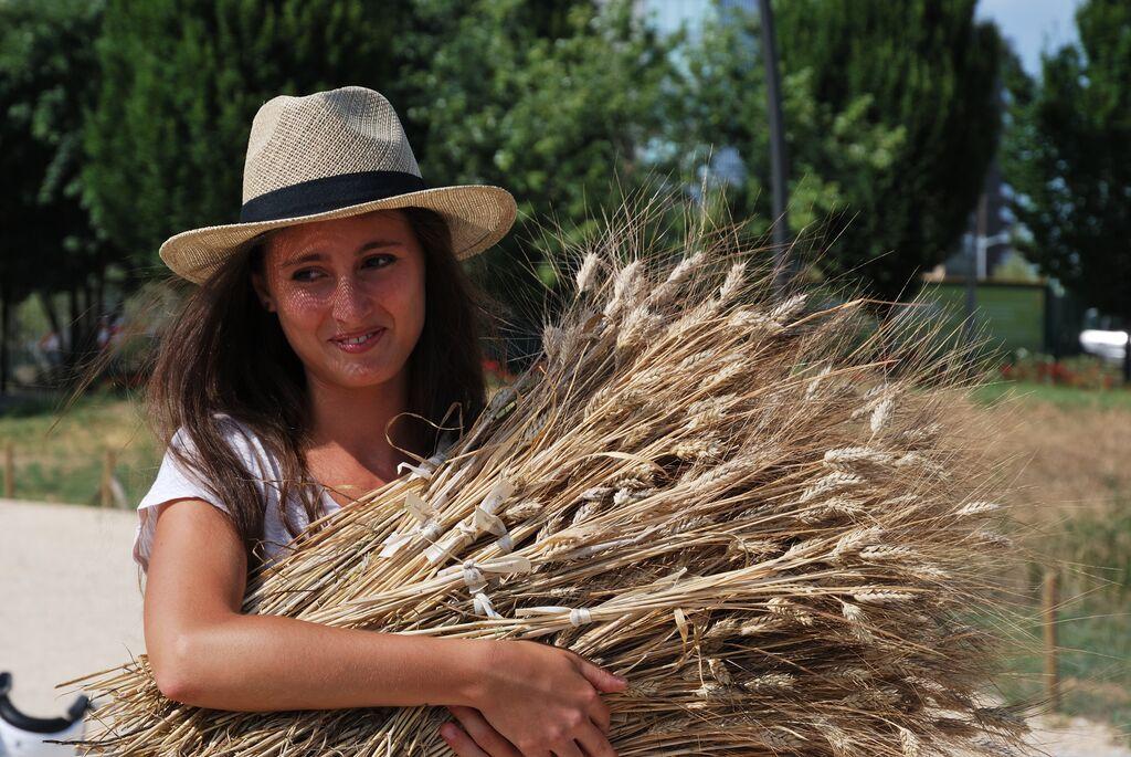 Festa del raccolto Wheatfield – Grazie!