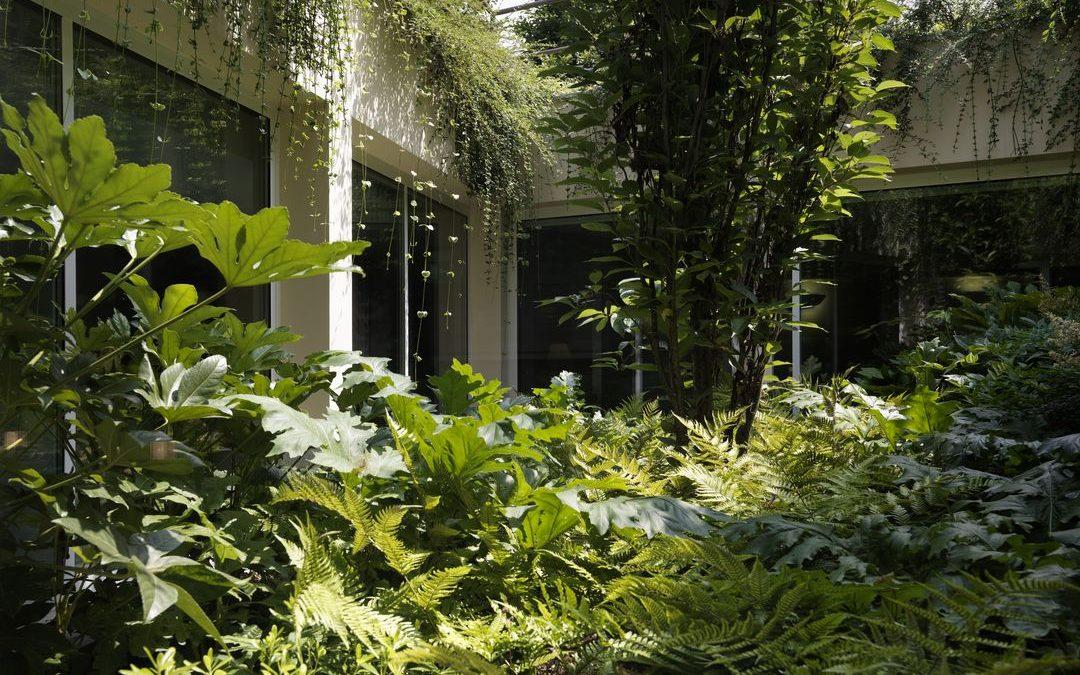 Il giardino sottoterra