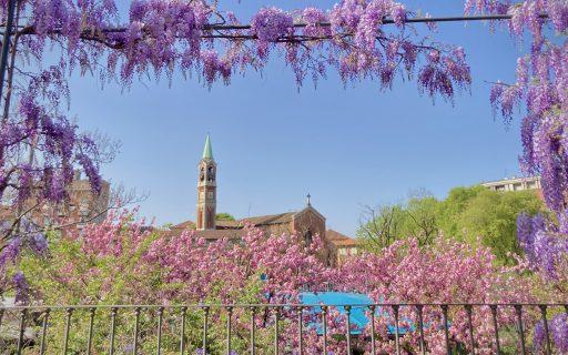 Buona Pasqua e buona primavera da AG&P greenscape!